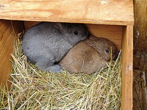 Two kits in a nest box.