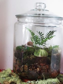 Terrarium Jar Wide Shot